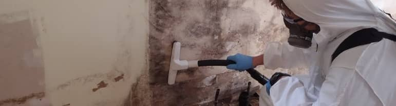 Mould Removal & Remediation
